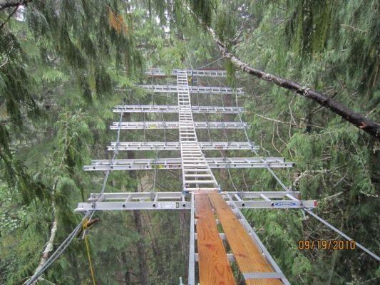 This web, constructed of steel cable and aluminum ladders, was built in the summer of 2009 and will support a new treehouse 75 feet in the air.