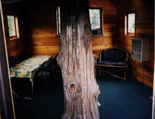 Composite photo of living room (with tree trunk in center)