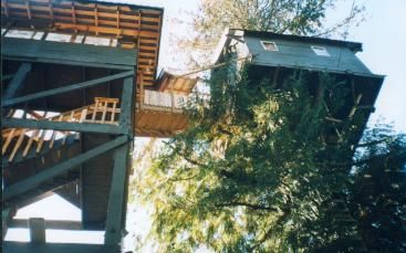 Looking up at the staircase and connecting stairway to the treehouse